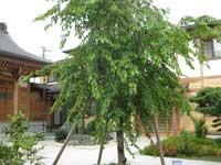 地福寺板碑