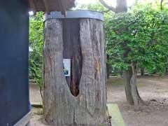 淵の宮氷川神社枯れ杉