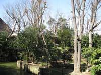 明王院庭園