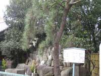 鷹見の松と七重塔・首塚