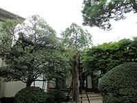 桂林寺本堂
