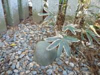 香取神宮要石