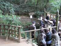 八重垣神社鏡の池の様子