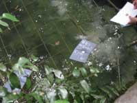 鏡の池に浮かべた占い紙