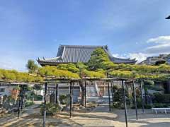 慶円寺の松ノ木