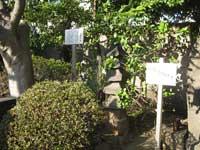 心行寺五重層石塔