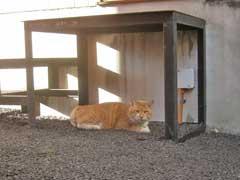 妙法稲荷神社社殿裏の猫