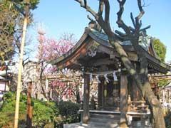 亀戸天神社紅梅殿