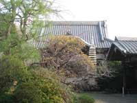 観乗寺本堂