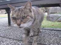 善慶寺の猫