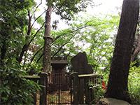 妙福寺袈裟掛けの松