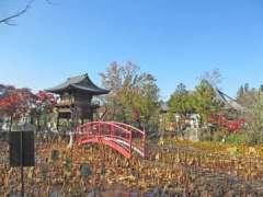 善長寺蓮の池