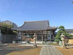 長照寺大いちょうの木