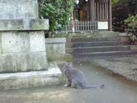 葛谷御霊神社お賽銭箱への招き猫