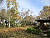 藤橋城跡公園